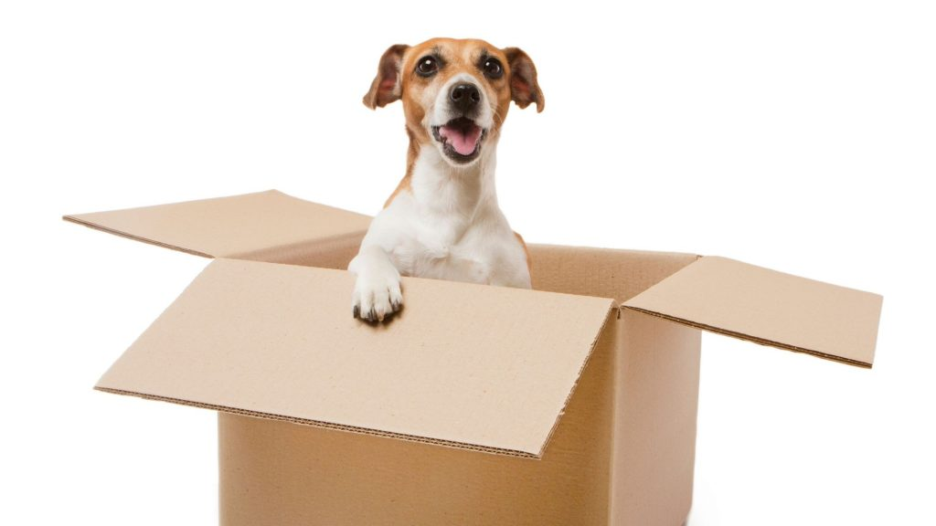 Tips For a Stress-Free Move With Your Pets